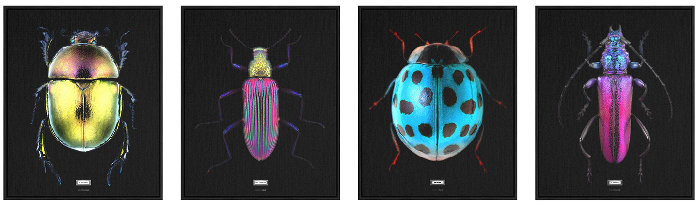 The Beetles Collection by Emanuele Pangrazi
